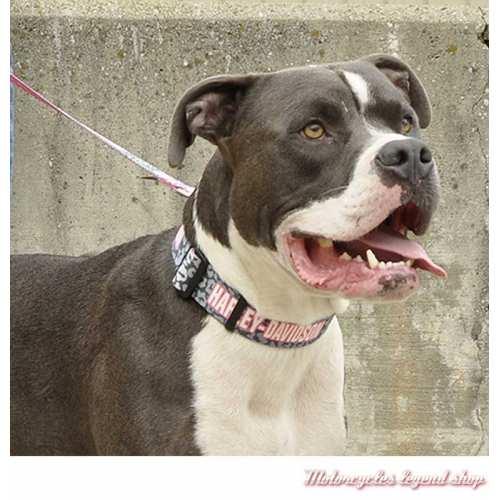 Collier pour chien Leopard et rose Harley-Davidson, nylon, visuel, H3991-H-LPS20