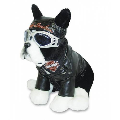Peluche Boston Terrier, bouledogue biker, ? cm, Harley-Davidson 20284